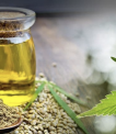 Knowing about THC in Marijuana